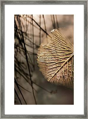 Lily Pond Zen Framed Print by Jessica Jenney