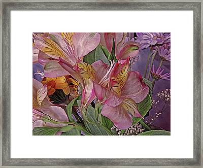 Lily Profusion 7 Framed Print