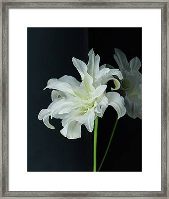 Lily Reflected Framed Print