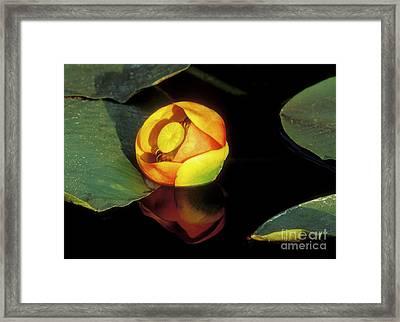 Lily Reflection Framed Print