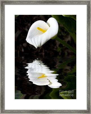Lily Reflection Framed Print by Avalon Fine Art Photography