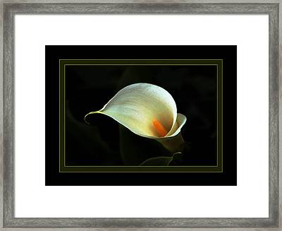 Lily Framed Print by Richard Gordon