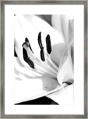 Lily Framed Print by Rick Rauzi
