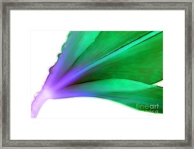Lily Spirit Framed Print by Krissy Katsimbras