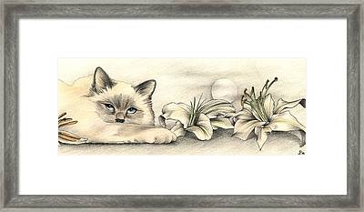 Lily The Birman Framed Print by Johanna Pieterman