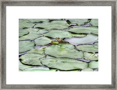 Lily The Frog Framed Print