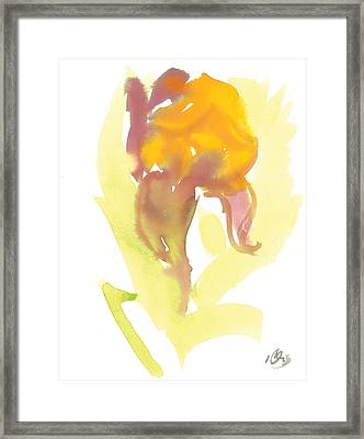 Lily Two Framed Print