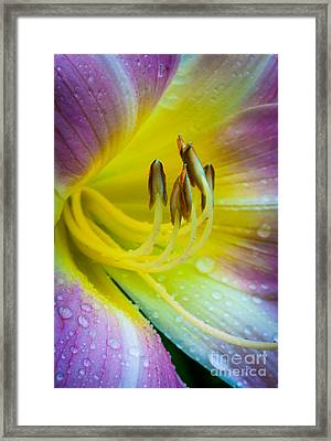 Lily Universe Framed Print by Inge Johnsson