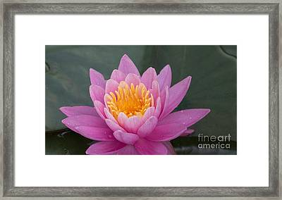 Lily Up Close Framed Print