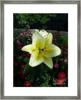 Lily Upon The Pond Framed Print