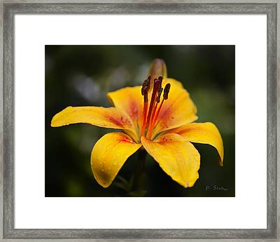Lily Was Here Framed Print by Patricia Stalter