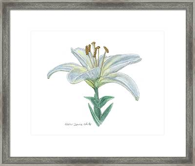 Lily Watercolor Framed Print