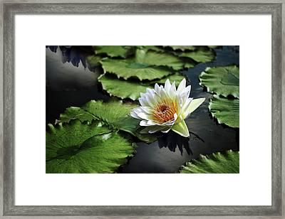 Lily White Framed Print by Jessica Jenney