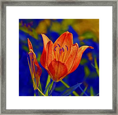 Framed Print featuring the photograph Lily With Sabattier by Bill Barber
