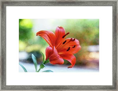 Lily With Sand Framed Print