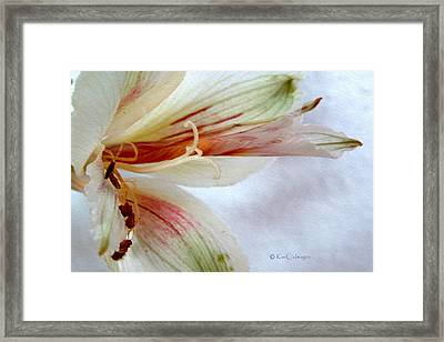 Framed Print featuring the digital art Lily With Texture by Kae Cheatham