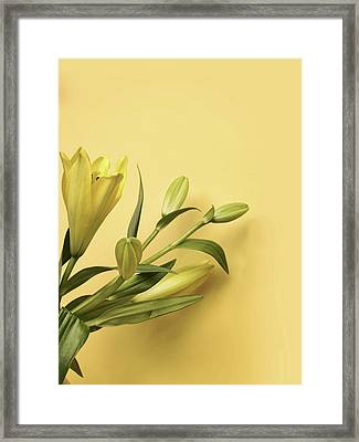 Lily Yellow Framed Print by Mark Rogan