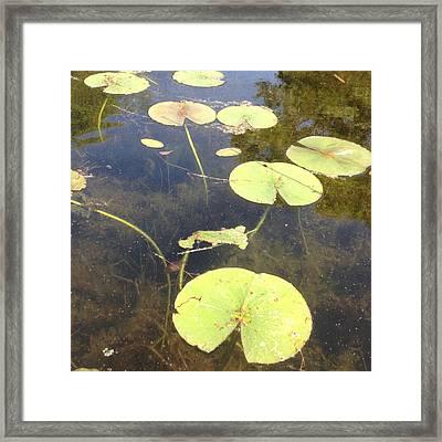 Lilypads Framed Print by Lori Thompson