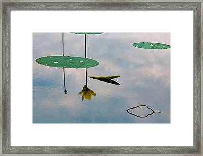 Lily's Reflection Framed Print by Carolyn Dalessandro