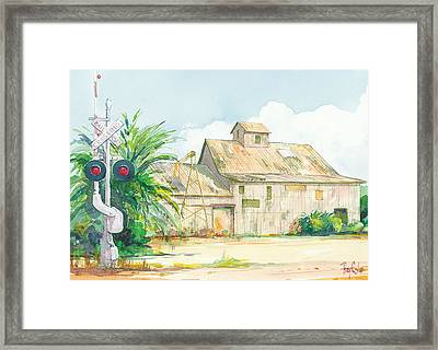 Lima Bean Plant 2 Framed Print by Ray Cole