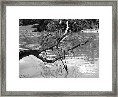 Limb Over Water Framed Print by Angela Christine