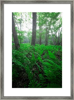 Limberlost IIi Framed Print by Rick Berk