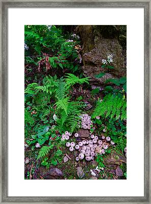 Limberlost Framed Print by Rick Berk
