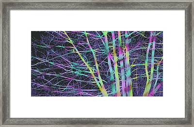 Limbs And Twigs Framed Print