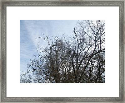 Framed Print featuring the photograph Limbs In Air by Jewel Hengen