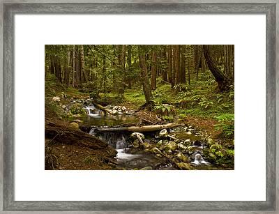 Lime Kiln Creek 1 Framed Print