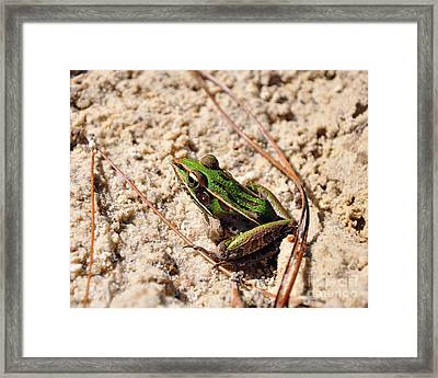 Lime-like Framed Print by Al Powell Photography USA