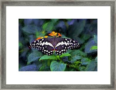 Framed Print featuring the photograph Lime Swallow Tail by James Steele