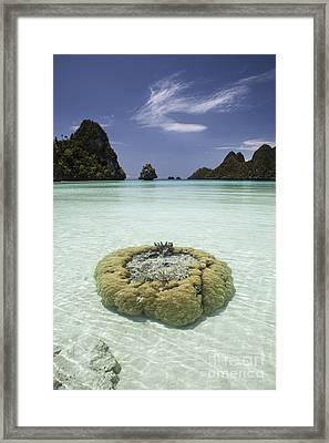 Limestone Islands Surround Corals Framed Print by Ethan Daniels