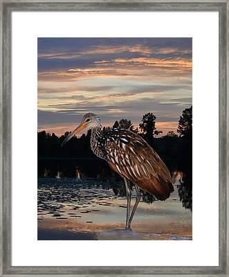 Limpkin - Morning Sunrise Framed Print