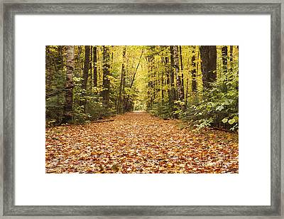 Lincoln Woods Trail  - White Mountains New Hampshire Framed Print by Erin Paul Donovan