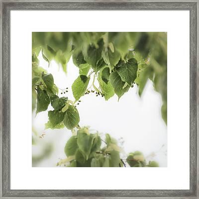 Linden In The Rain 2 -  Framed Print by Julie Weber