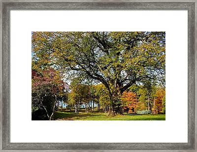 Linden Tree On The Hudson Framed Print by Colleen Kammerer