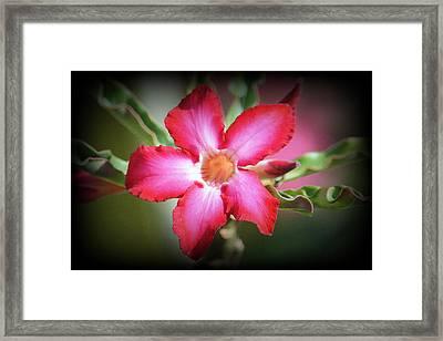 Lindsy Framed Print
