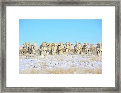 Line Em Up Rams Framed Print