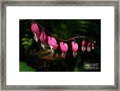 Line Of Hearts Framed Print by Steve Augustin