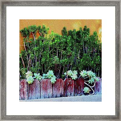 Line Of Succulents And Red Fence Framed Print