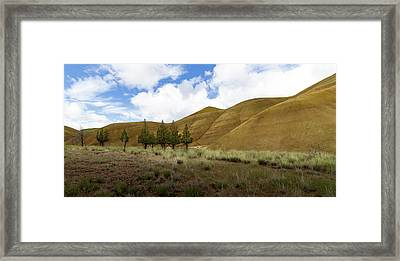 Line Of Trees At Painted Hills Framed Print by Jean Noren