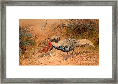 Lineated Kaleege Framed Print