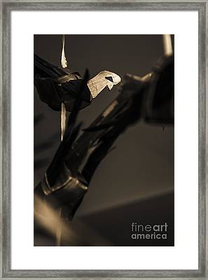 Lines And Feathers Framed Print