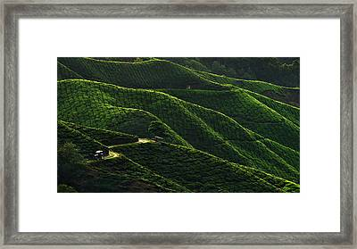 Lines Framed Print by Jordan Lye