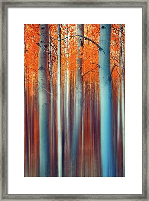 Lines Of Autumn Framed Print by John De Bord