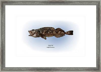 Ling Cod Framed Print by Ralph Martens