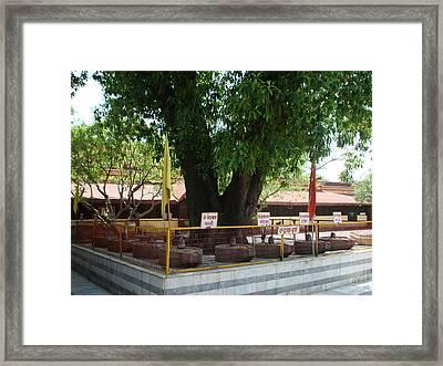Lingams Haridwar Framed Print