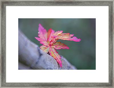 Lingering Autumn Framed Print