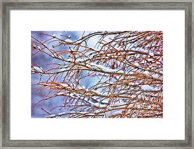Lingering Winter Snow Framed Print